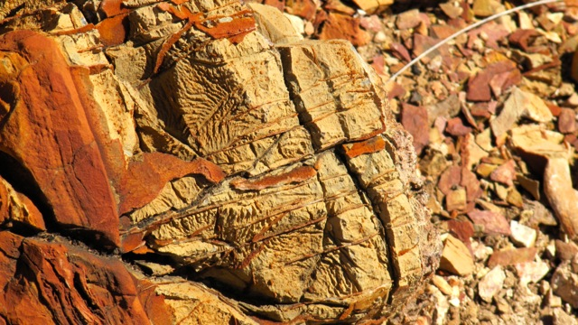 9612_fossile_14-08-15.jpg