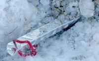 5021_sardine-alu-neige.jpg