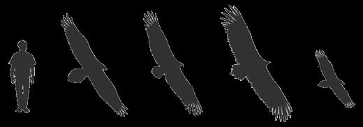7En2uLxlw.silhouette-vautours.png