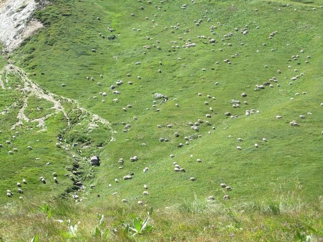 7227_auvergne_jour3_moutons2.jpg