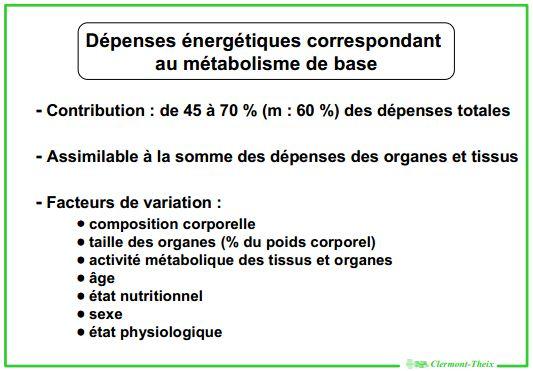 calorie chausson au pomme dans le corps humain